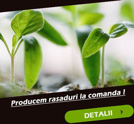 rasaduri de legume